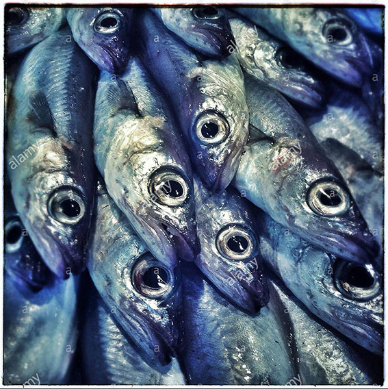 Sardines fishes close up on a market in Barcelona, Catalonia, Spain stock photography