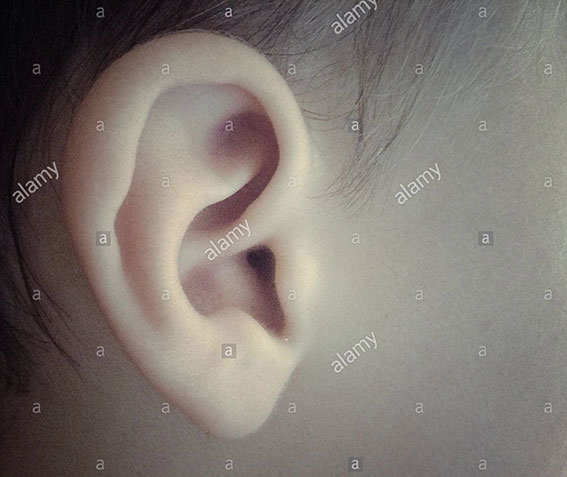 A baby's ear stock photography
