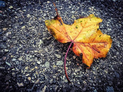 Autumm leaf on asphalt © Queralt Sunyer