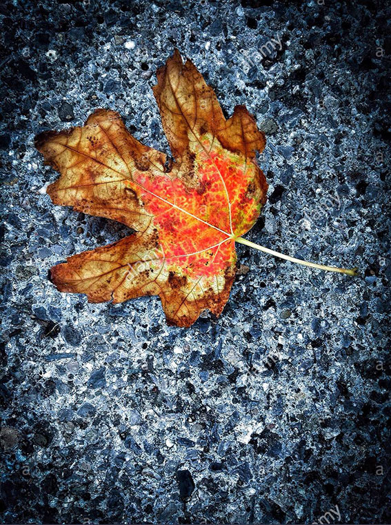 Autumn colors on asphalt. Colorful leaf on the floor stock photography