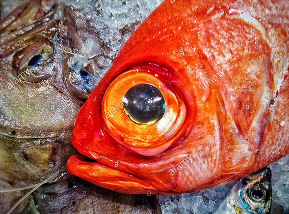 Close up of red fish for sale stock photography
