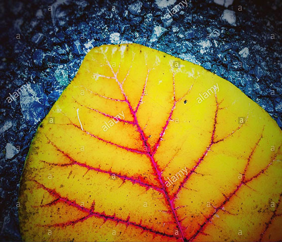 Colorful yellow leaf on asphalt stock photography