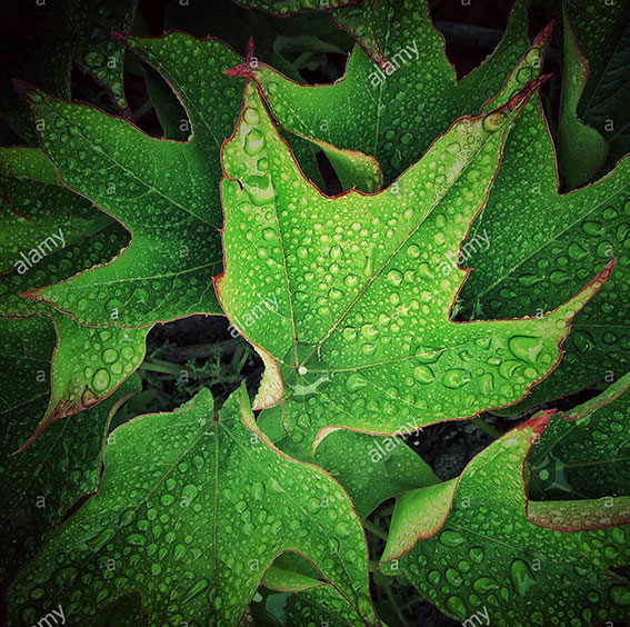 Green leaves with rain drops of water stock photography