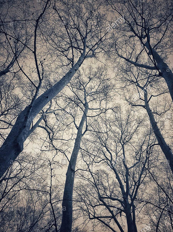 Looking up branches of trees in La Devesa park, Girona, Catalonia, Spain stock photography