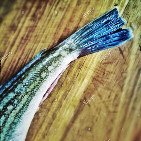 Fish tail on a wooden board ready to be grilled stock photography