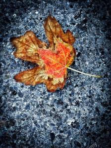 Autumn colors on asphalt © Queralt Sunyer