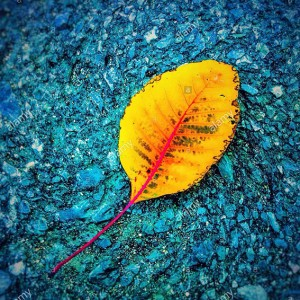 Yellow leaf on blue background © Queralt Sunyer